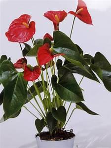 Plantes Vertes D Intérieur Photos : plantes vertes et fleuries d 39 int rieur fleuriste marseille 13013 au d lice des fleurs ~ Preciouscoupons.com Idées de Décoration