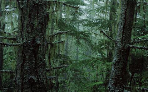 wallpaper db rainforest hd