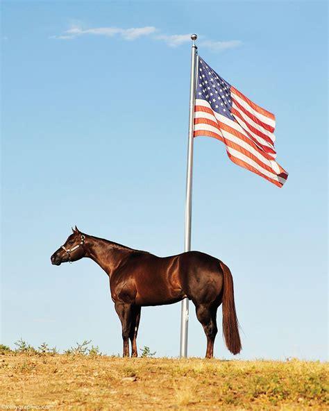 horse quarter american horses jumping horsechannel proven success many