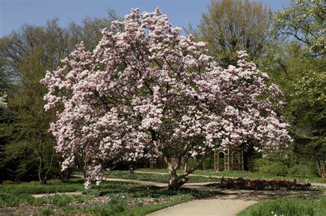 Botanischer Garten Braunschweig Cafe by Tulpen Magnolie Im Stadtpark Botanischer Garten G 252 Tersloh