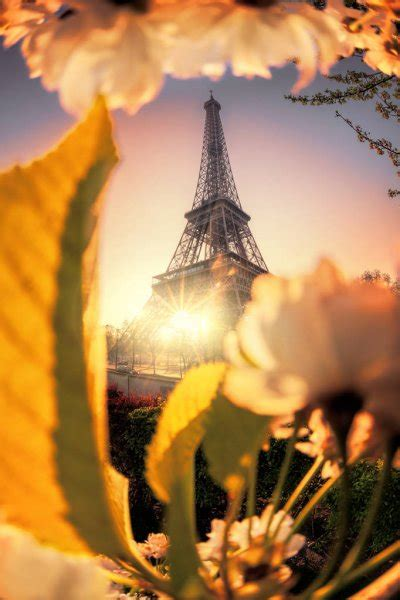 eiffel tower  spring time  paris france stock