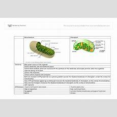 Mitochondria & Chloroplast  Alevel Science  Marked By Teacherscom