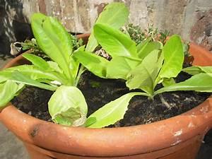 Salat Pflanzen Abstand : salat selber anbauen ~ Markanthonyermac.com Haus und Dekorationen