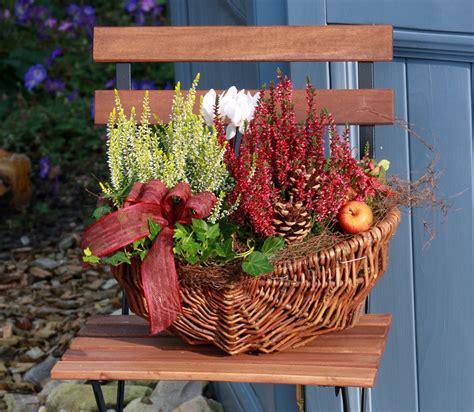 Nelken Für Balkonkästen by Farbenpracht Und Pflanzenspa 223 Im Herbst