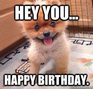 Happy Birthday Animal Meme - hey you happy birthday cute dog cool j quicklime http melanysguydlines com funny