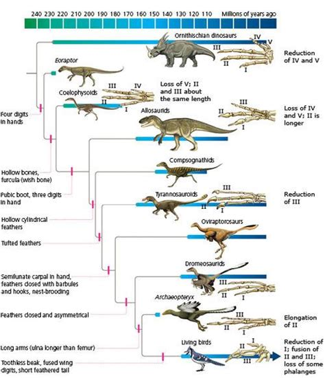 the fossil record of evolution descent with modification