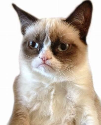 Transparent Cat Grumpy Loading
