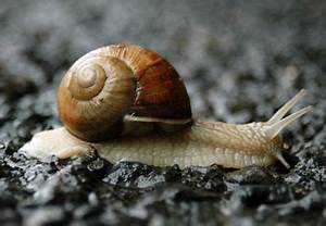 Mollusk history and some interesting facts