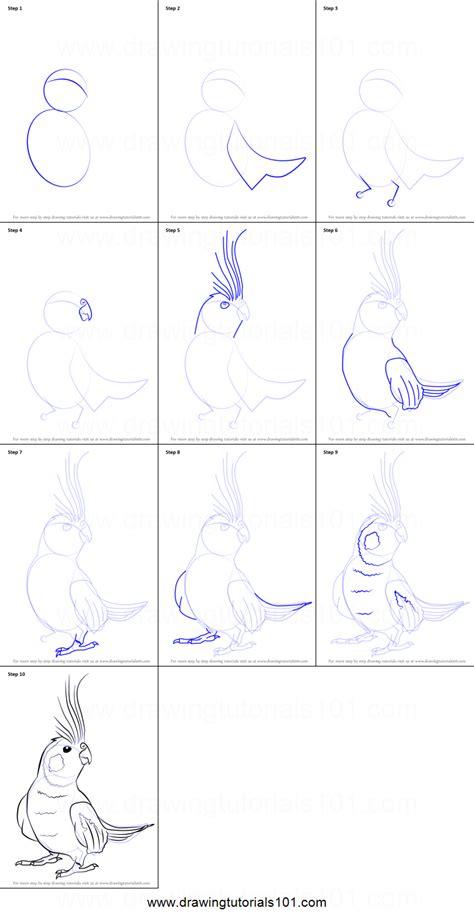 draw  cockatiel printable step  step drawing