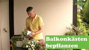 Blumenkübel Bepflanzen Sommer : gartentipp balkonkasten mit sommerblumen bepflanzen youtube ~ Eleganceandgraceweddings.com Haus und Dekorationen