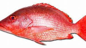 Extending Red Snapper Season | Congressman Matt Gaetz