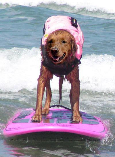 Ricochet Dog