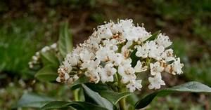 Arbuste Persistant En Pot : arbuste persistant en pot marie claire ~ Premium-room.com Idées de Décoration