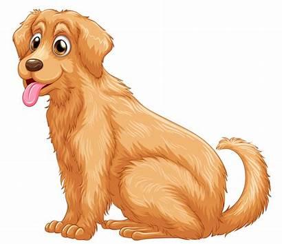 Retriever Golden Transparent Dog Clipart Clip Puppy