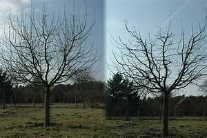 Apfelbaum Schneiden Anleitung : 100 lyonnais apfelbaum schneiden anleitung pdf download ~ Lizthompson.info Haus und Dekorationen