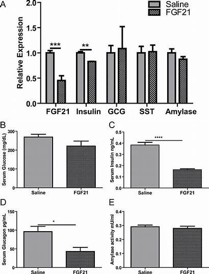 Fgf21 Islet Pancreas Treatment Chronic Exogenous Effect