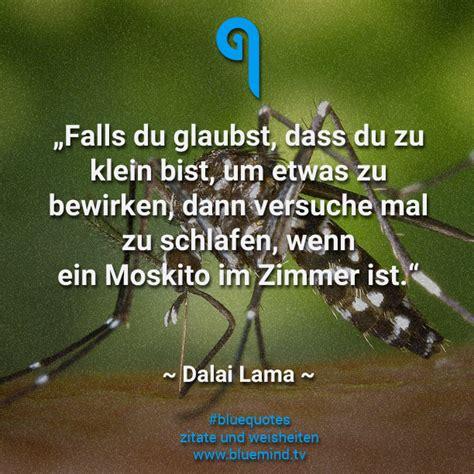 dalai lama seine besten zitate bluemind tv