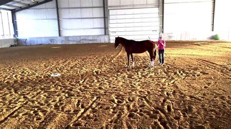 horse tame