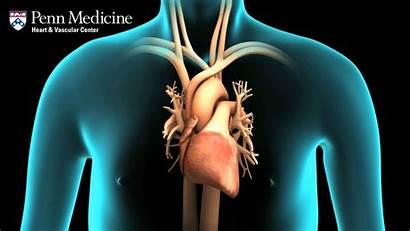 Engagement Heart Enhances Visual Nucleus