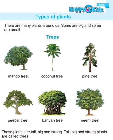 kindergarten science types of plants preschool
