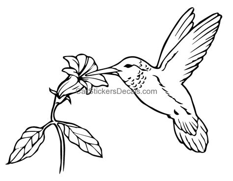 Hummingbird Sticker & Decal