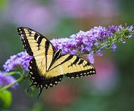 Butterfly and Flower Photography