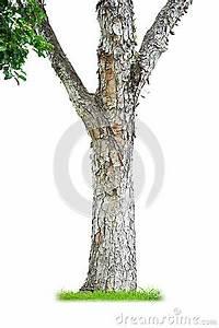 Achat Tronc Arbre Decoratif : tronc d 39 arbre photographie stock libre de droits image ~ Zukunftsfamilie.com Idées de Décoration