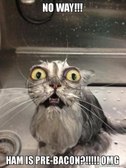 cat box no way ham is pre bacon omg cat bath a meme