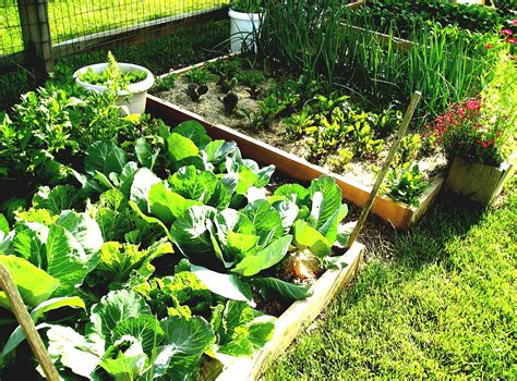 garden planting design herb garden layout ideas butterfly from and design garden trends