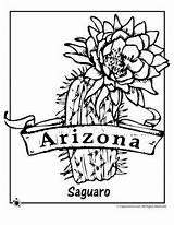 Cactus Sketchite sketch template