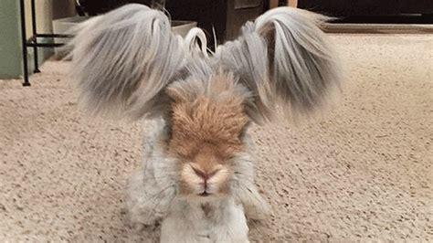 wally ist das suesseste kaninchen der welt