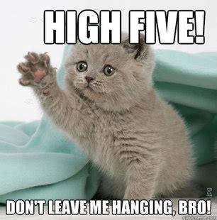 grammar cats offer assistance   grammatically