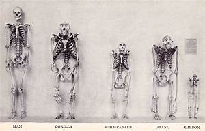 Did humans evolve from apes? | CreateDebate