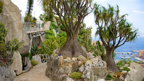 Exotic Garden In Monaco, Expediaca