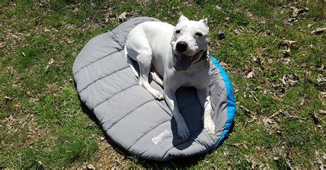 ammessi campeggi cani italia dog sono gnius jesolo helder dove