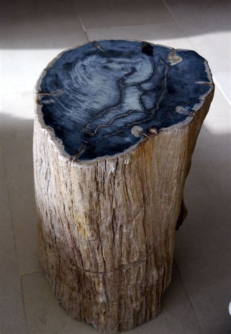 petrified wood table literally exemplifies long