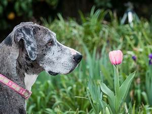 Best and Worst Flowers to Plant for a Pet-Friendly Garden ...