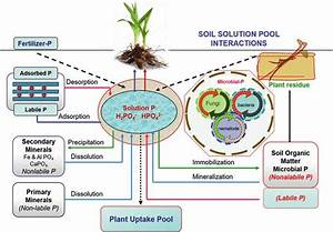 2 An Overview Phosphorus Cycle