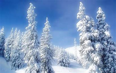 Winter Forest Seasons Wallpapers Nature Desktop Snow