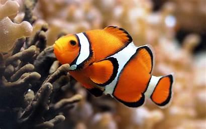 Exotic Fish Unique