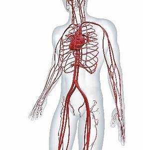 Central venous access uses a catheter is placed in a large ...