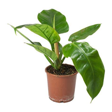 tanaman hias bisa berfungsi sebagai