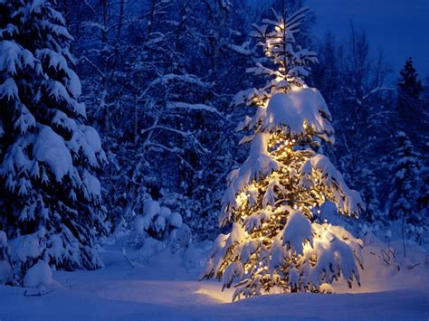 Winter Christmas Trees 1600x1200 Wallpaper
