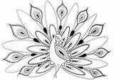 Coloring Peacock Cool Adults Popular sketch template