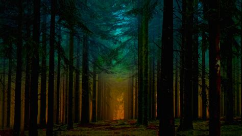 forest  dawn fondo de pantalla hd fondo de escritorio