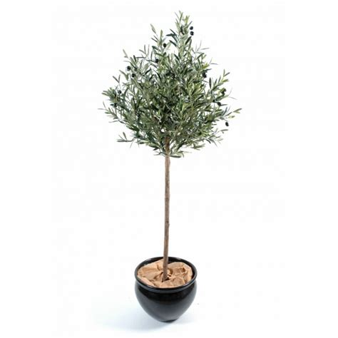 olivier en pot prix olivier en pot pas cher 28 images olivier bonsai pas cher provence deco fressac 30170
