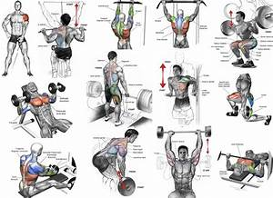 The Most Effective Muscle Building Exercises