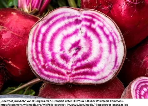 Und Beet De by Rote Beete Quot Chioggia Quot Saatgut Pflanzenrarit 228 Ten Aus