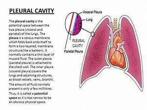 Pulmonary Circulation  Pulmonary Edema  Pleural Fluid