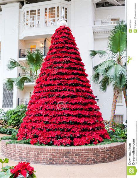 red poinsettias flowers  christmas tree shape stock
